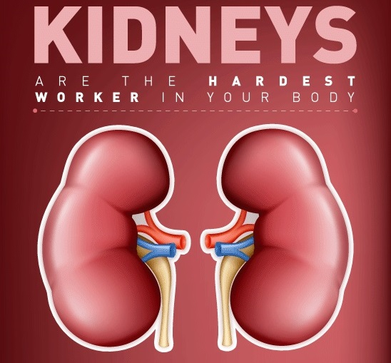 8 Common Habits That May Damage Kidneys